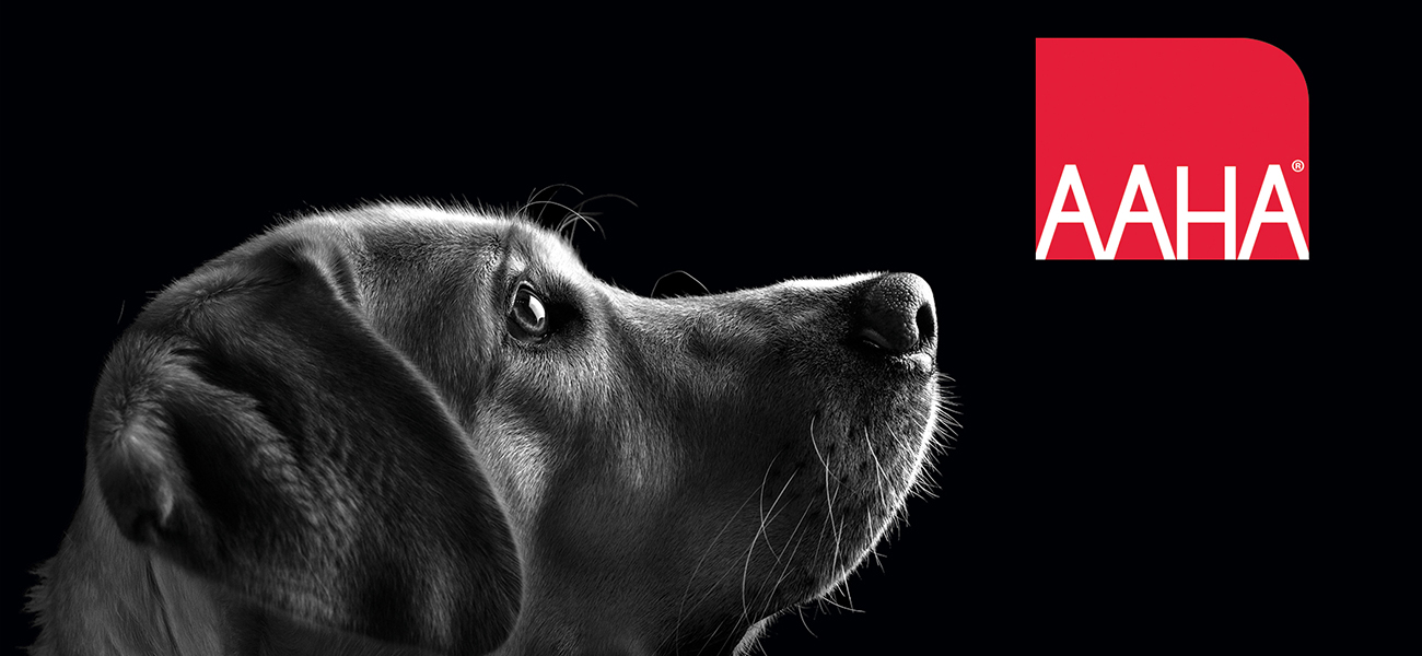 Posts On The Pet Industry | Trone Brand Energy Blog